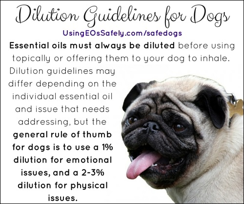 Is It Safe To Use Essential Oils With Dogs Using