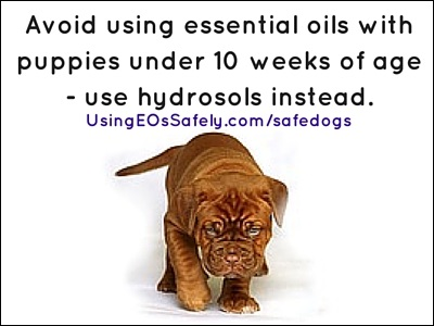 Can Dogs Eat Essential Oils