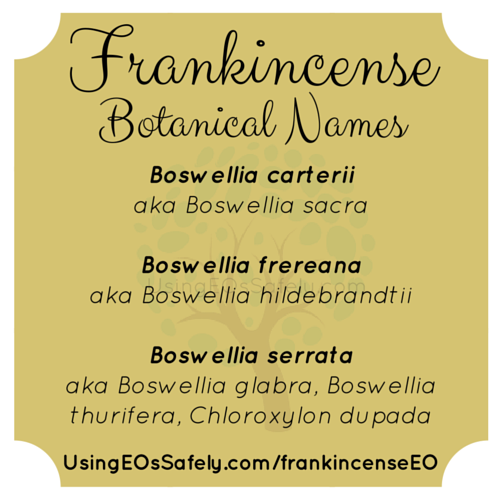 02aFrankincense_BotanicalNames