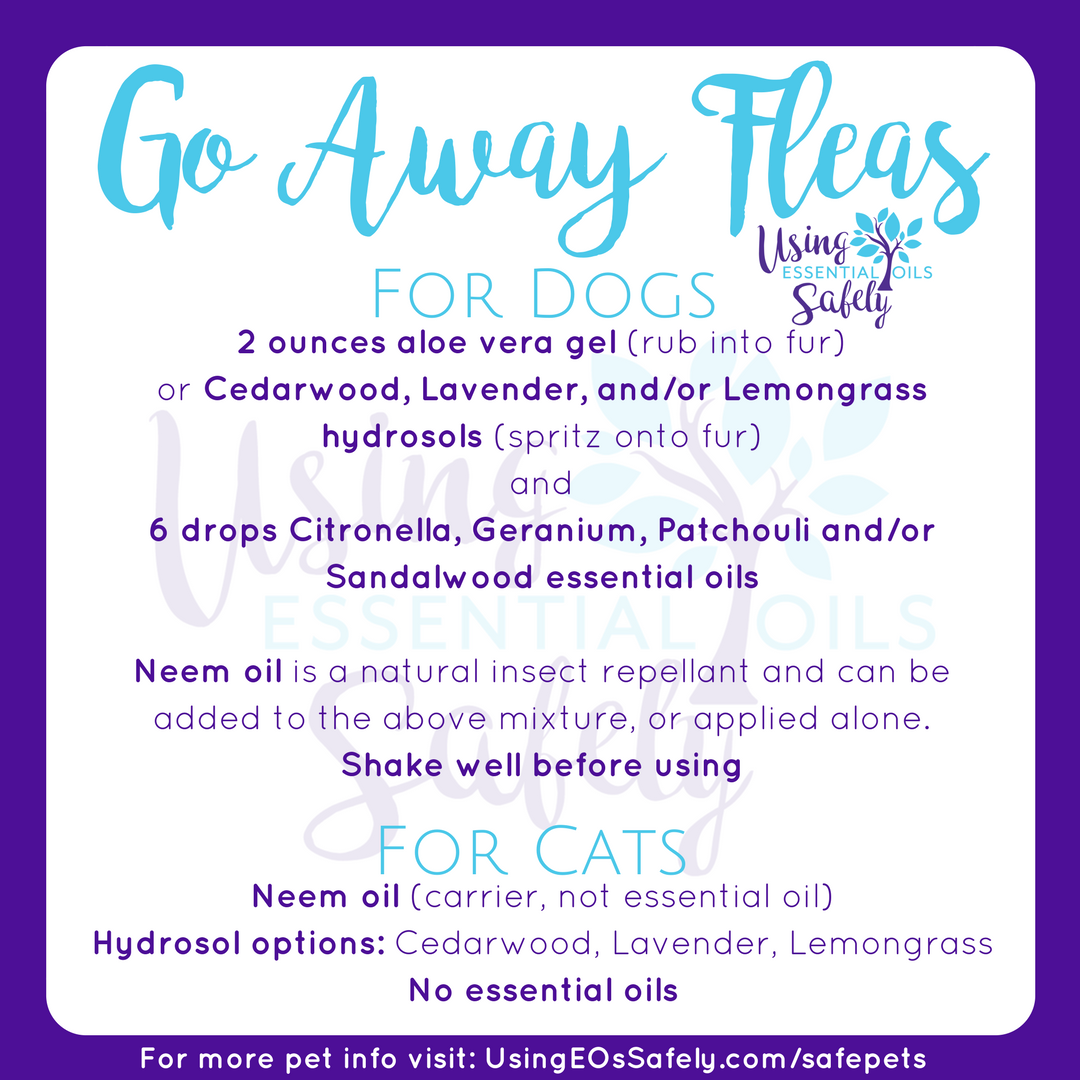 Safely Using Essential Oils With Pets Using Essential