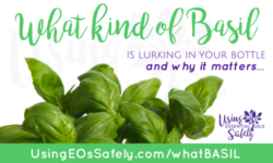 What kind of Basil Essential Oil is lurking in your bottle – and why it matters…